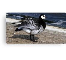 Barnacle Goose Canvas Print