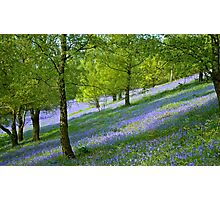 Bluebell Slopes Photographic Print