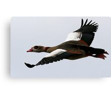Flight Of The Egyptian Goose Canvas Print