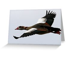 Flight Of The Egyptian Goose Greeting Card