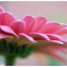 Petals by msgigi