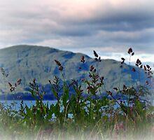 Mountain view over Loch Linnhe,Scotland. by Aj Finan