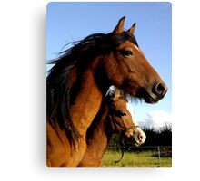 Welsh Ponies Mother and daughter Canvas Print