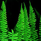 Fab Ferns by BevsDigitalArt