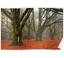Dreaming of a cool autumnal forest Poster