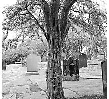 Cemetery Tree Photographic Print