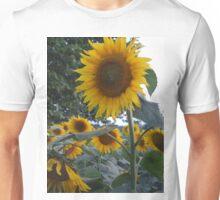 sunflower at sunset Unisex T-Shirt