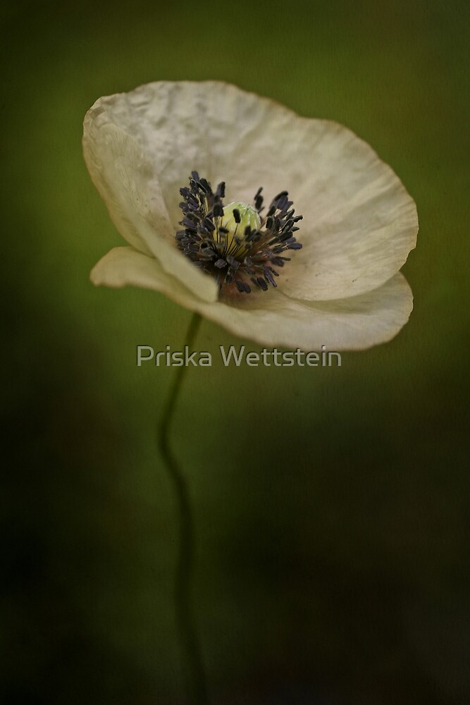 Alba by Priska Wettstein