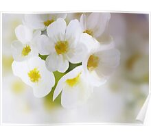 Yellow and White Floral Poster