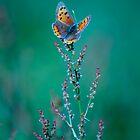 Meadow Dancer-2 by Constance Janik