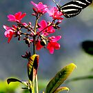 Butterfly with Pink Flower by Landscapes Mainly .