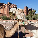 t-Benhaddou by Kerry Dunstone
