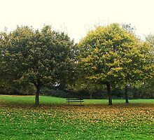 Autumn Trees, Honiton, Devon by k84ddesigns