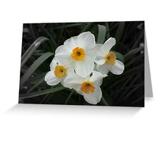 Daffodils Selectively Greeting Card