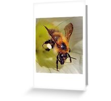Bee On Flower 0020 Greeting Card