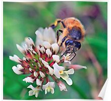 Bee On Flower 0024 Poster
