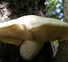 Mushroom on a Maple Tree by MaeBelle