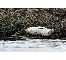 Sunbathing by the sea Photographic Print