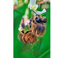 Bee On Flower 0030 Photographic Print