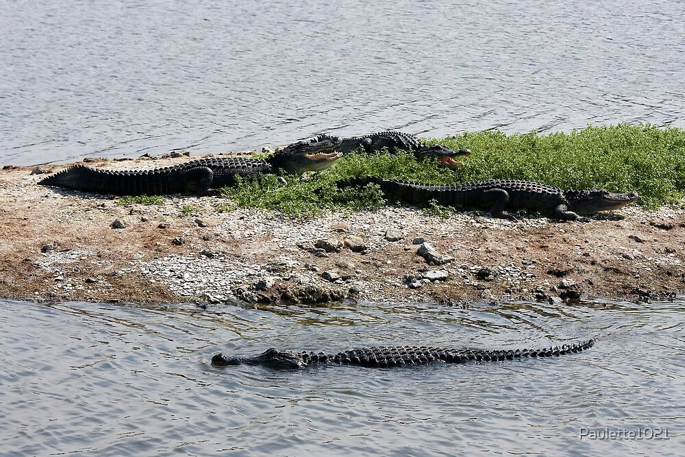 Alligator's on the Island by Paulette1021
