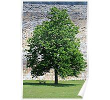 Tree at Croton Dam Poster