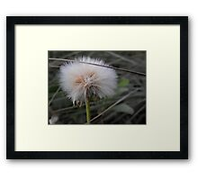 Crying Dandelion Framed Print