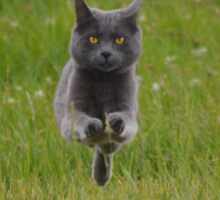 Bounding Grey Farm Cat Returns Home Sticker
