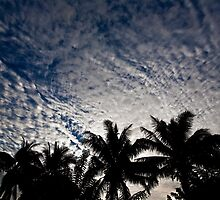 Palm Silhouettes at Dusk, Nadi, Fiji by morealtitude