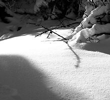 Snow Shadows by Mandi  Ruch