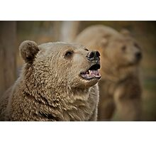 Don't feed the bears Photographic Print