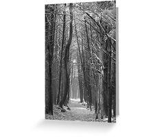 woodland walkway Greeting Card