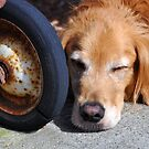 Hunter was so tired he fell asleep at the wheel. by Bob Hortman