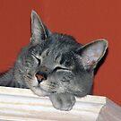 Sleepy Head by MichelleR