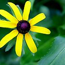 Yellow and Purple Flower by Landscapes Mainly .