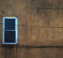 one window one wire one bird  by Isa Rodriguez