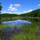 A Small Marsh by the Side of the Road by MaryinMaine