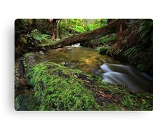 """""""From the Log"""" Canvas Print"""