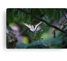 Butterfly haven..... Canvas Print
