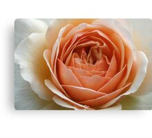 Peach Delight Canvas Print