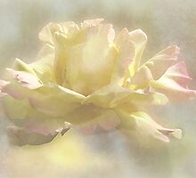 ~ Peace Rose ~ by Brenda Boisvert