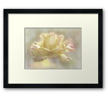 ~ Peace Rose ~ Framed Print