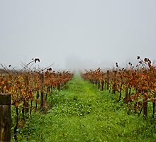 misty vines by paul erwin