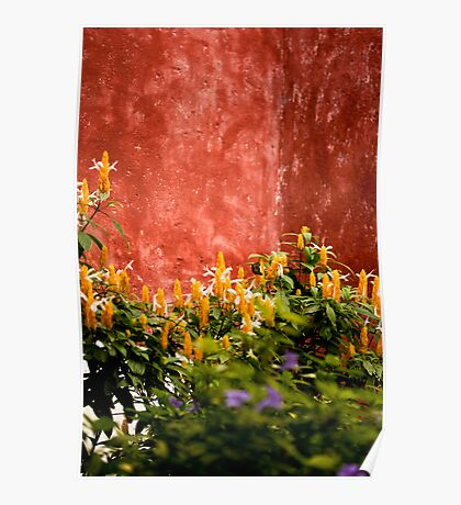 Flowers and Red Wall, Antigua Poster