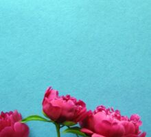 bunch of pink peony flowers against blue background Sticker