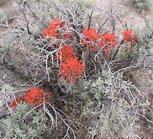 Indian Paint Brush by Roz Fayette