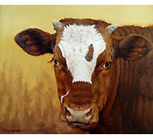 Rusty Red Calf Photographic Print