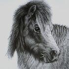Shetland Pony by Margaret Stockdale