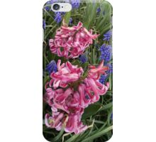 Pink Hyacinths in a sea of Grape Hyacinths iPhone Case/Skin