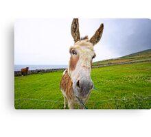 Dingle Donkey Canvas Print