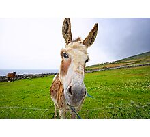 Dingle Donkey Photographic Print